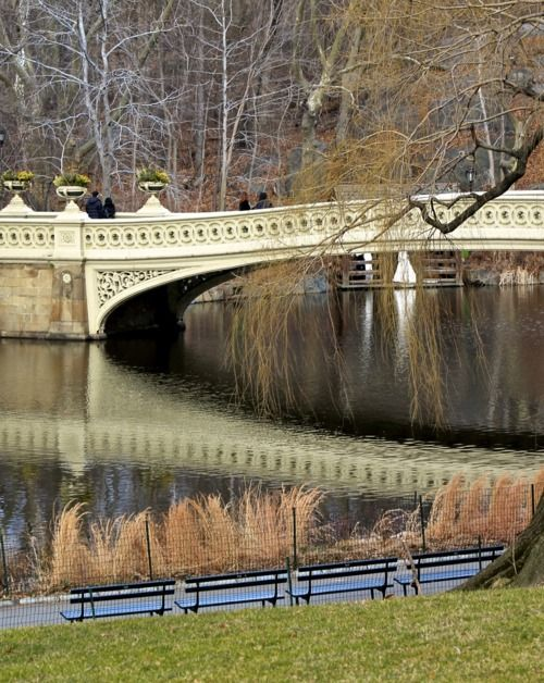 The Pond in Central Park, NYC: Beautiful Bridges, Centralpark Newyork, Favorite Bridges, Newyorkc Nyc, Bows Bridges, Central Parks, Parks Nyc, New York, Nyc Bows