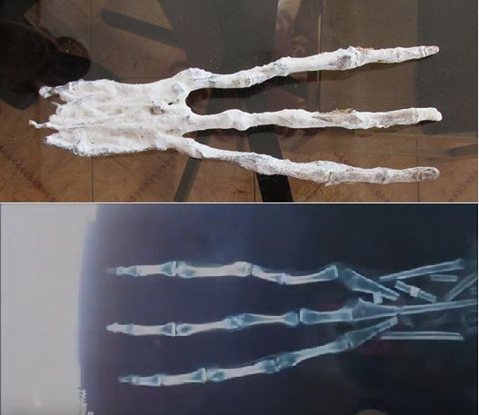 Mummified alien hand found in Peru, late 2016. The remains of multiple non-human human-like beings were found together in some kind of sarcophagus in the desert. A small skull, a complete tiny body, and this huge 3-fingered hand are a few examples from the cache.