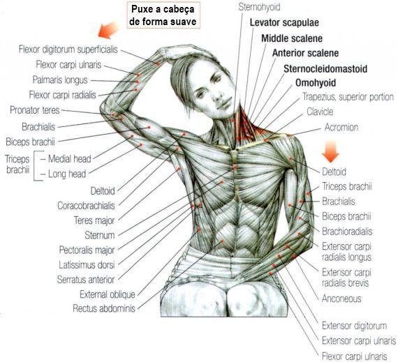 alongamento pescoço e trapézio