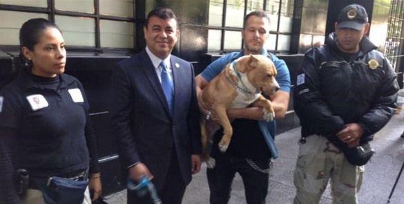 Buscan castigar peleas de perros en la CDMX