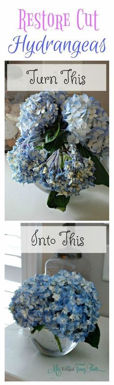 .~Double the Life of Your Cut Hydrangeas | missfrugalfancypants.com~.