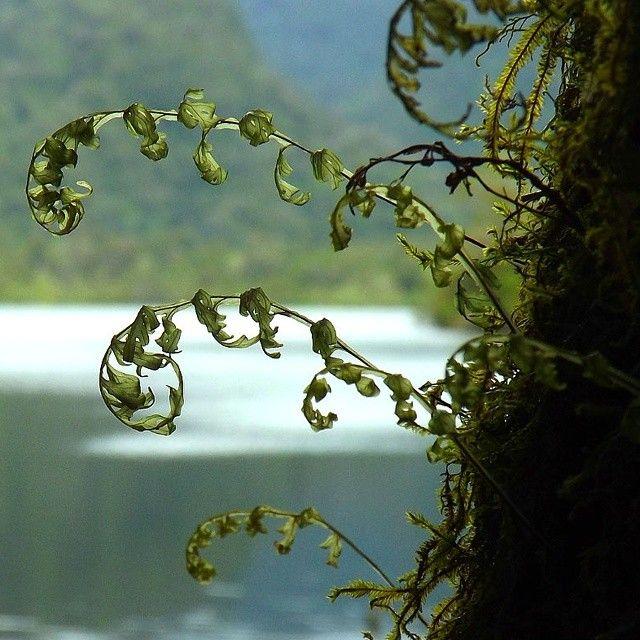 Tomada en #parque #alerce #andino  Puerto Montt #chile #naturaleza