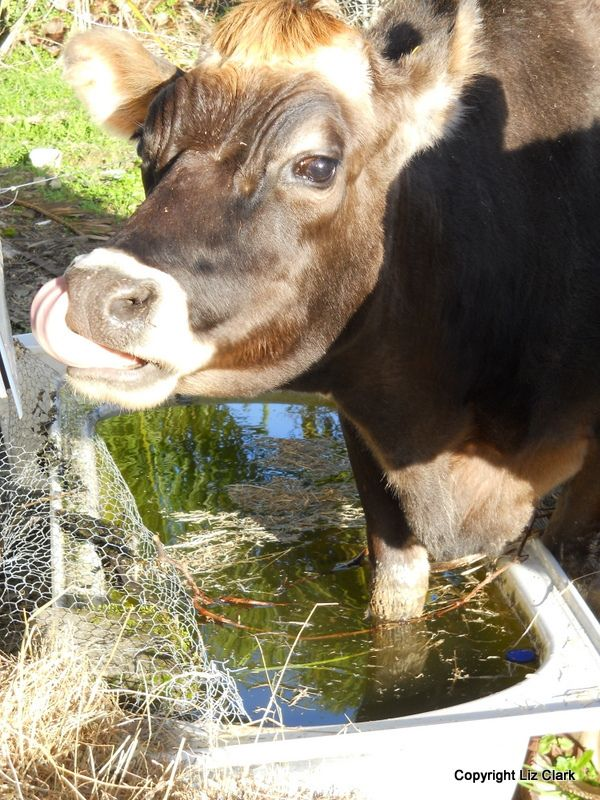 Stolen Hay and a bath to go
