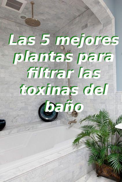 Las 5 mejores plantas para filtrar las toxinas del baño