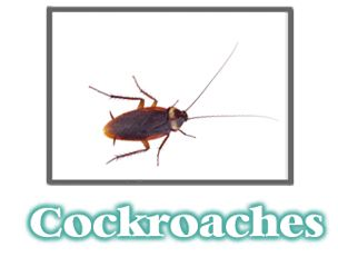 I've been in to one to many homes with pest control issues. If I see some critters crawling around, it makes me not even want to sit down on their couch. Especially if those critters are cockroaches. I would rather burn the house down and never go back. Luckily getting a pest control company to take care of it isn't too hard. If only it was as easy to find a nice way to tell your friends they need to hire someone.