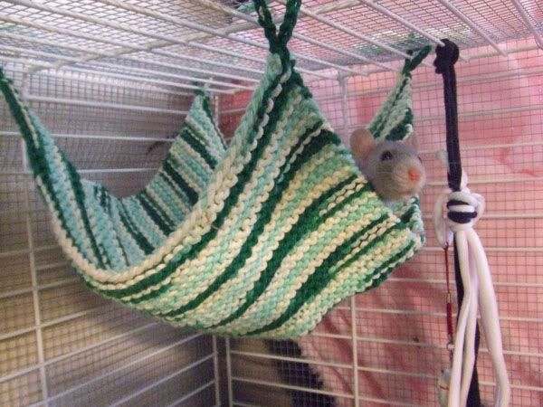 Knitting and Crocheting! - A quick hammock for rats!
