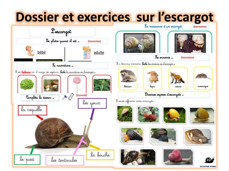 Les 17 meilleures images du tableau escargot sur pinterest escargot maternelle escargots et - Escargot maternelle ...