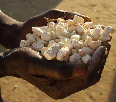 The Baobab Fruit once it has been removed from the shell.  The pulp is dried and comes in little chunks.
