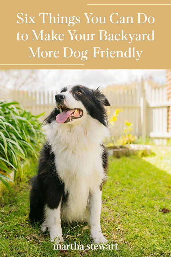 Six Things You Can Do To Make Your Backyard More Dog Friendly In 2020 Dog Friendly Backyard Dog Friends Pets