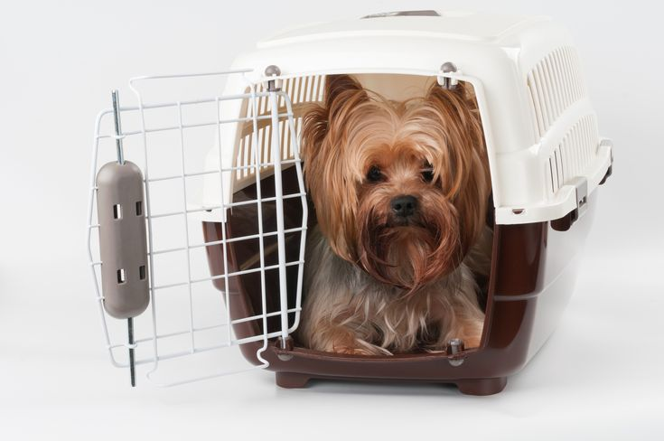 Choosing the right size crate for your dog is easy and we've written this easy guide to help you choose the right dog crate size the first time.