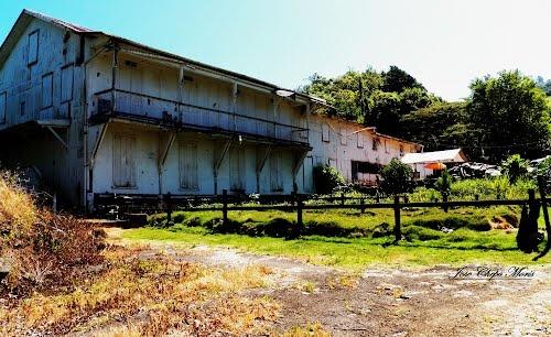 haciendas cafetaleras de puerto rico | Panoramio - Photo of Antigua Hacienda Masini-Yauco