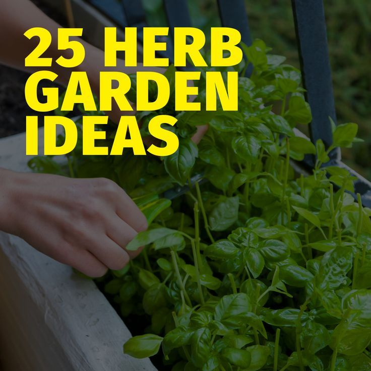 15 Indoor Herb Container Garden Ideas In 2020 Growing Herbs At Home