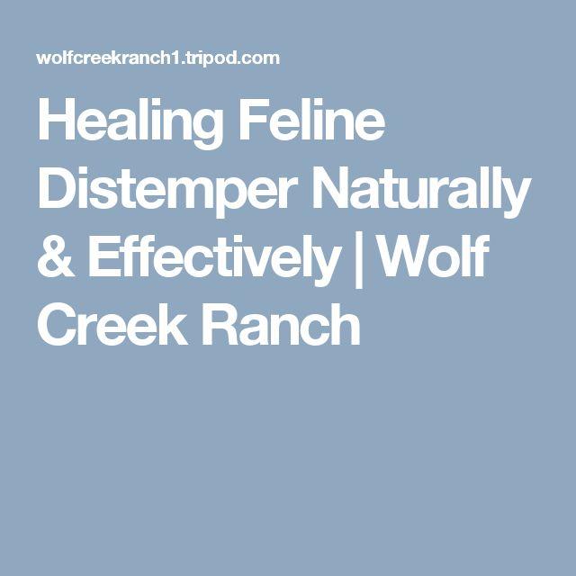 Natural & Effective Feline Distemper treatment helps Distemper kittens heal.