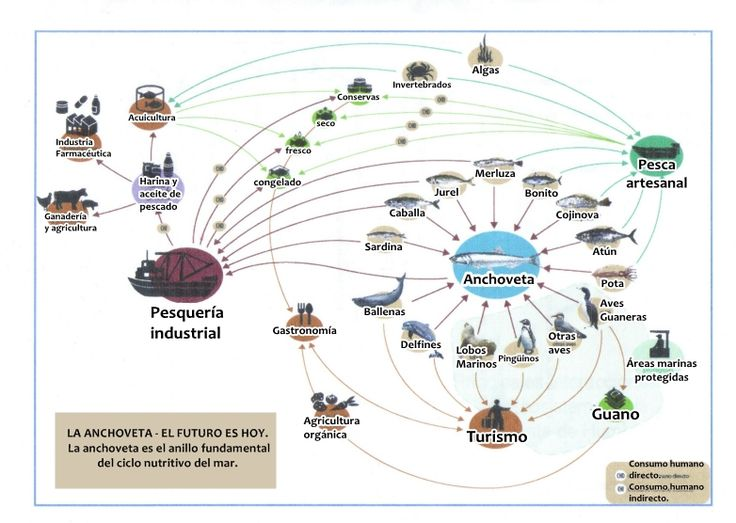recursos pesqueros del mar peruano - Buscar con Google
