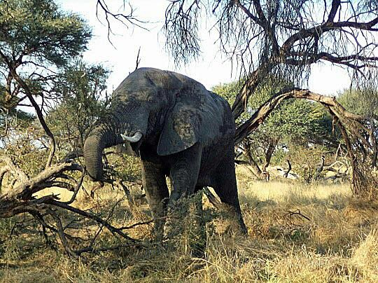 Gomoti Tented Camp is situated in the paradise that is the south-eastern Delta, where a classic Okavango land experience awaits, on floodplains and grasslands filled with general game and predators.