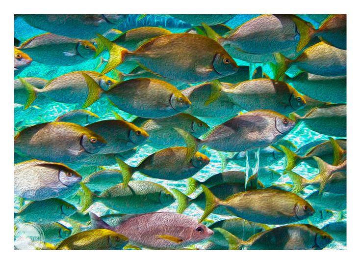 School fish aquarium Seaworld Gold Coast