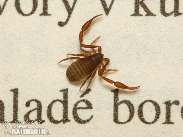 http://www.naturephoto-cz.com/photos/others/book-worm-69963.jpg