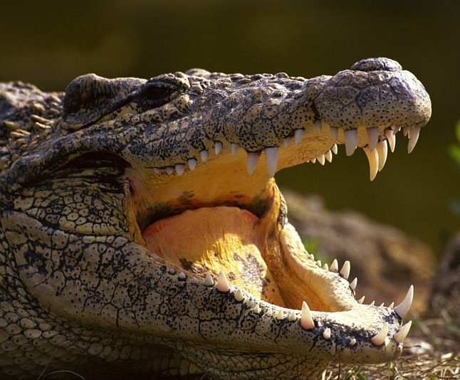 Australian Crocodile Tours, Adventures, Cruises and Crocodile Farms and Tourist Centres