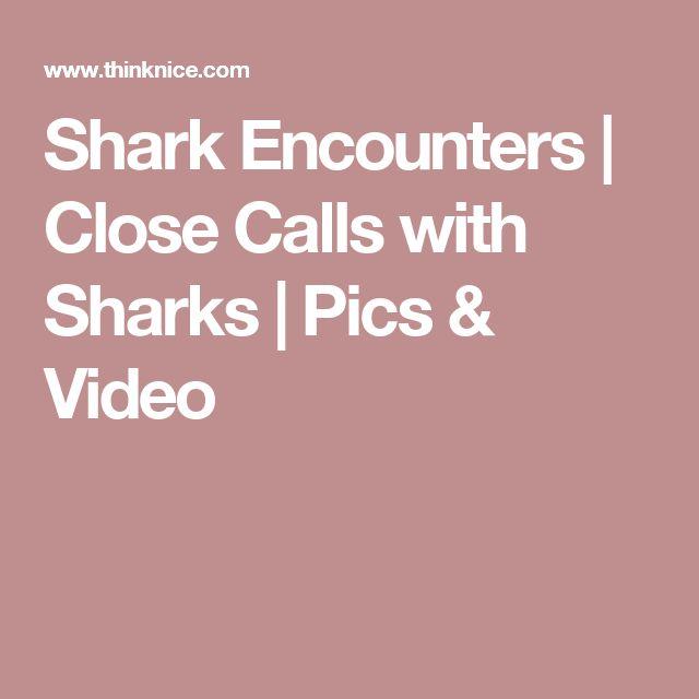 Shark Encounters   Close Calls with Sharks   Pics & Video