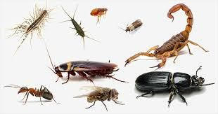 Advantages of professional pest control over doing it yourself