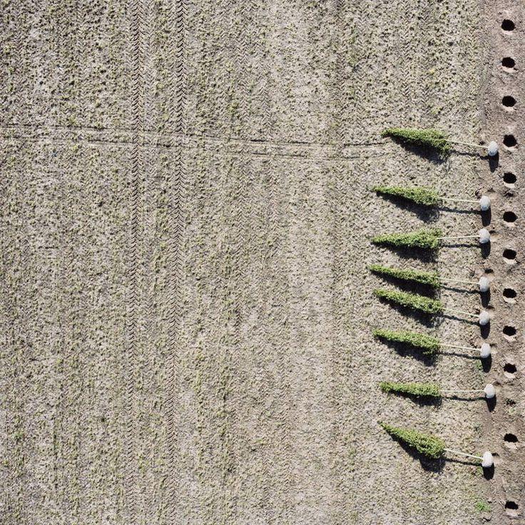 Tree farms by Gerco de Ruijter