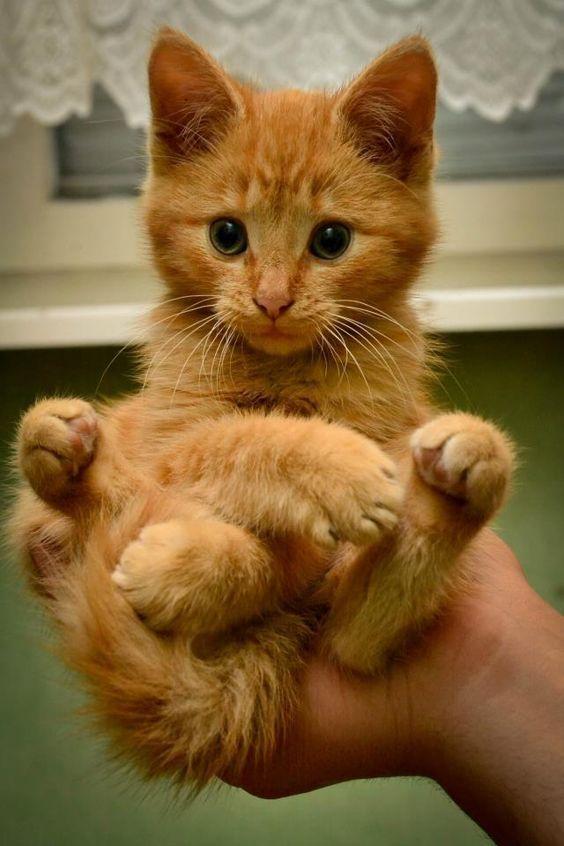 Diese Katze, die von einer menschlichen Hand gehalten wird, ist so bezaubernd, d…