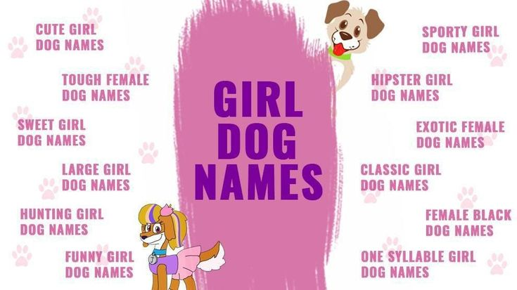 Girl Dog Names Top Female Dog Names Of 2019 Backed With 101 Greek Goddess Names That Make Unique Female Dog Names G Female Dog Names Dog Names Girl Dog Names