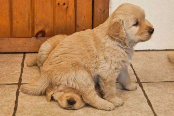 Sitting on Puppy