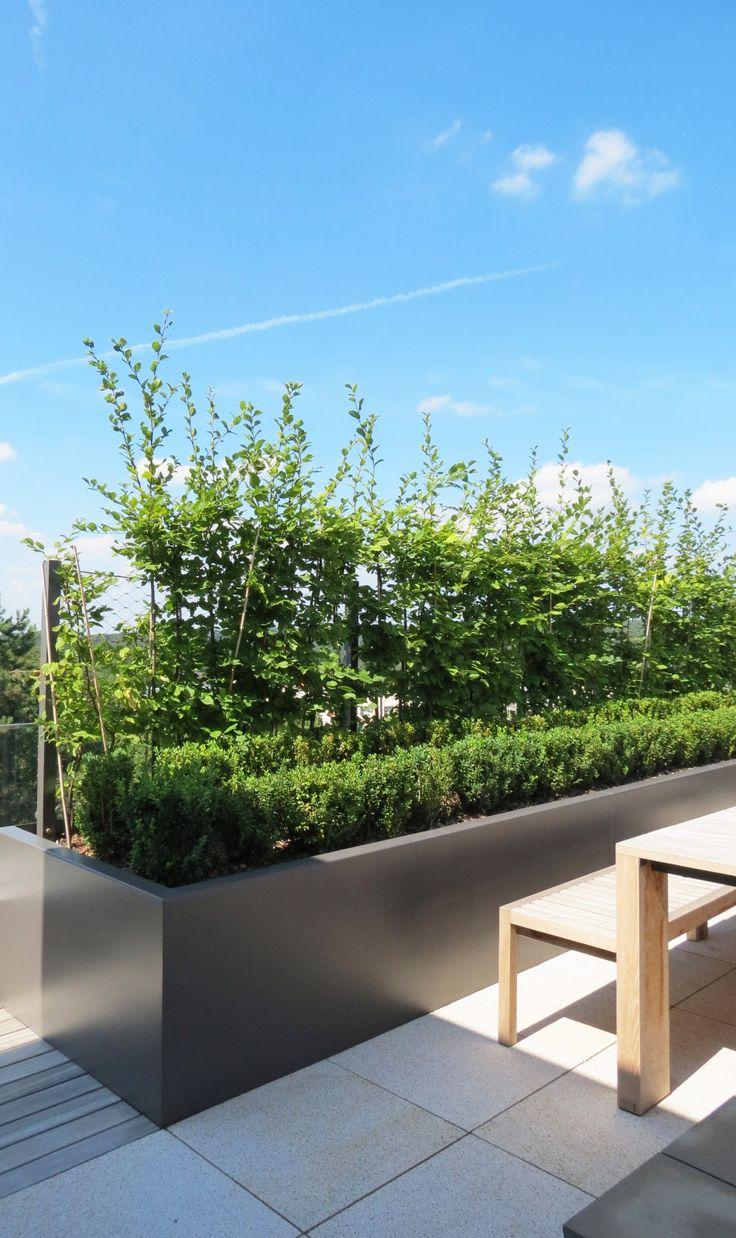 Jardin sur toiture, Luxembourg  1 an après. www.vereal.lu