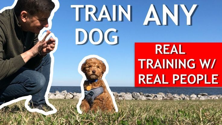 How To Train Your New Dog Real Training W Real People Stay