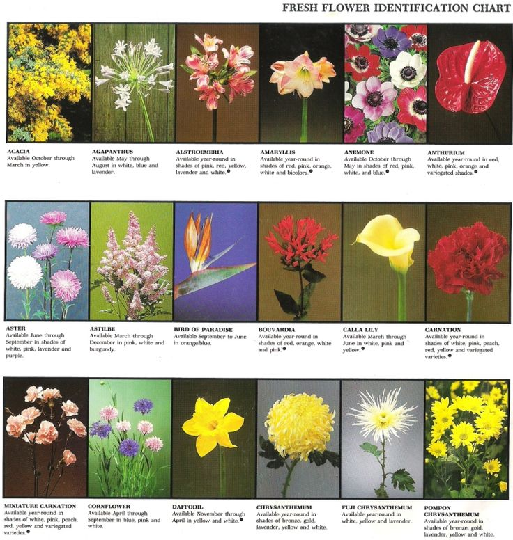 Pages and pages of fresh flower ID. Great for plant science, floral design, or Floriculture CDE team