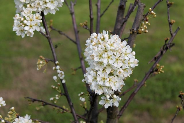 La primavera e' arrivata! / Spring is here!