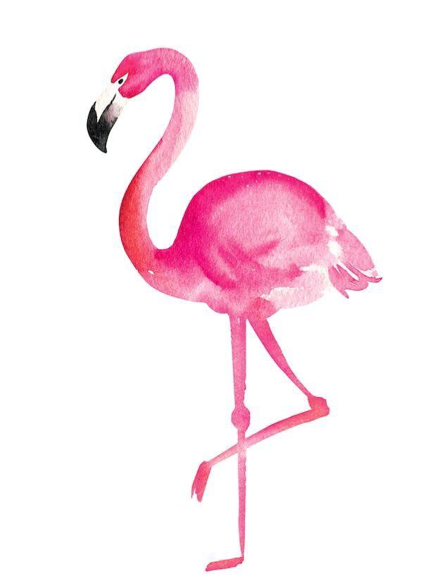 фламинго фото картинки чтоб нарисовать