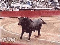 I would quite happy for the bull to rampage the entire spectator crowds, trampling them all to death. Amazing torturing animals to death is legal, and even cheered for, in this day and age.