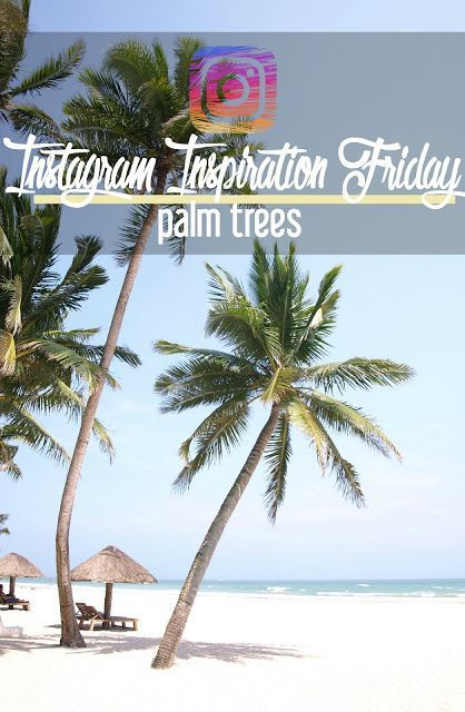 Instagram Inspiration Friday: Palm Trees