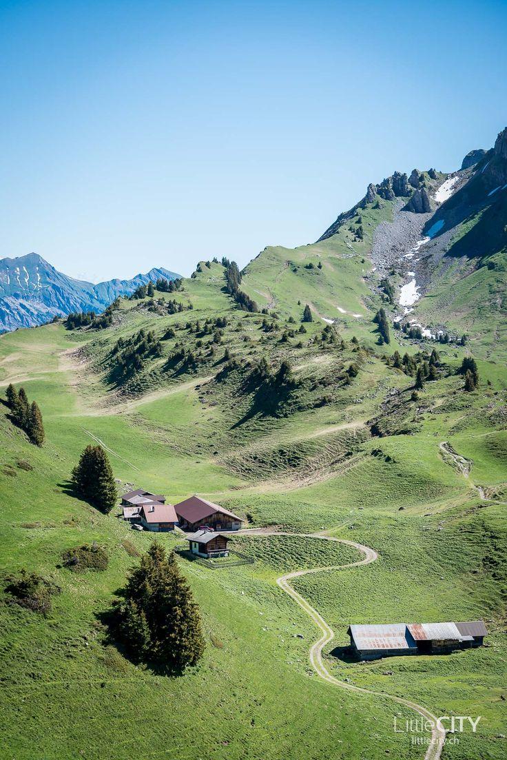 Schynige Platte im Berner Oberland: Eine Wanderung wie aus dem Bilderbuch