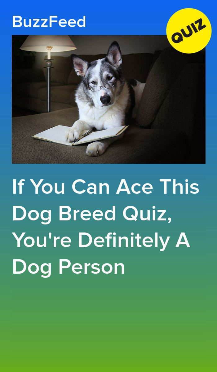 If You Can Ace This Dog Breed Quiz You Re Definitely A Dog Person