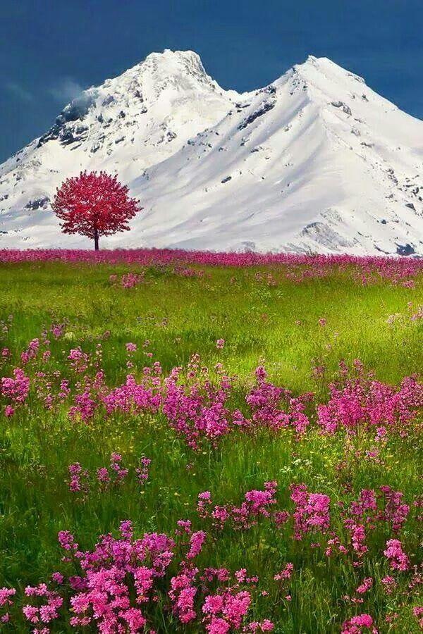 Primavera en los alpes suizos