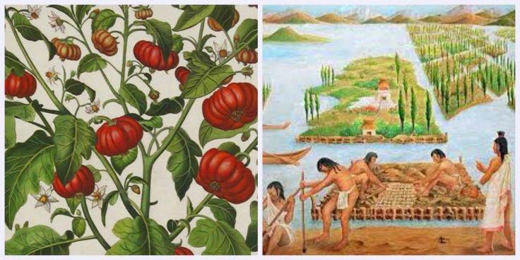 Πώς οι Αζτέκοι δημιούργησαν τη σημερινή ντομάτα | The curiosity of Cat