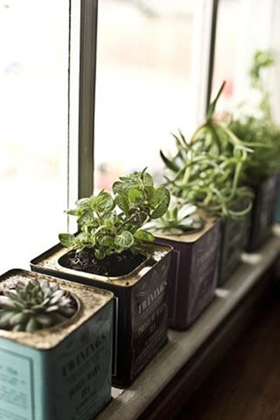 Cute-as windowsill garden in vintage tea tins.
