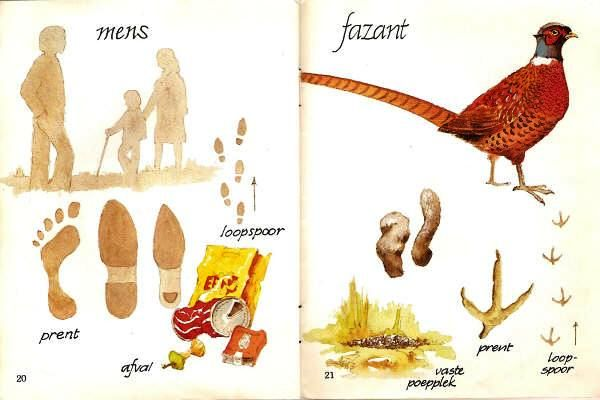 mens fazant