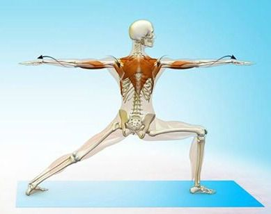 Warrior 2 Yoga Pose. Stretches and strengthens the legs, feet and ankles. Stretches the hips, groin, shoulders and chest. Helps to relieve backache.Boosts concentration and stamina Helps to open the lungs.