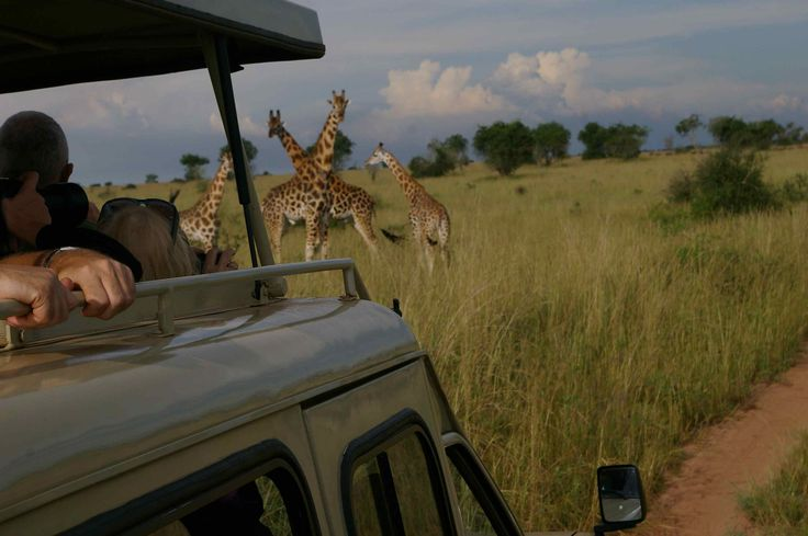 #TanzaniaSafari offer a huge diversity of landscapes and wildlife experiences making it perfect for safaris. Know more @ https://www.northernmasailandsafaris.com/