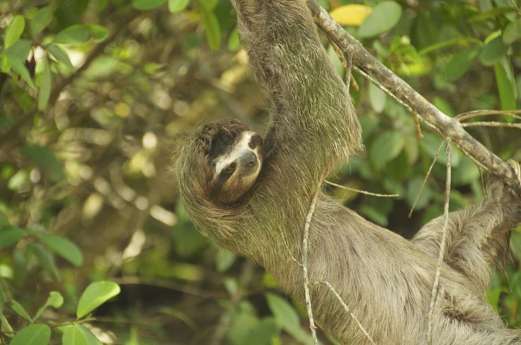 Fotografía: Destinos Reps - Canales Moín - Perezoso (Costa Rica)