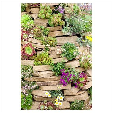 Garden & Plant Picture Library - Rock-garden made from pile of stones with succulents and alpines