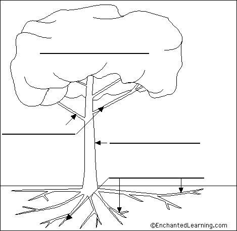 parts of a tree worksheet printable