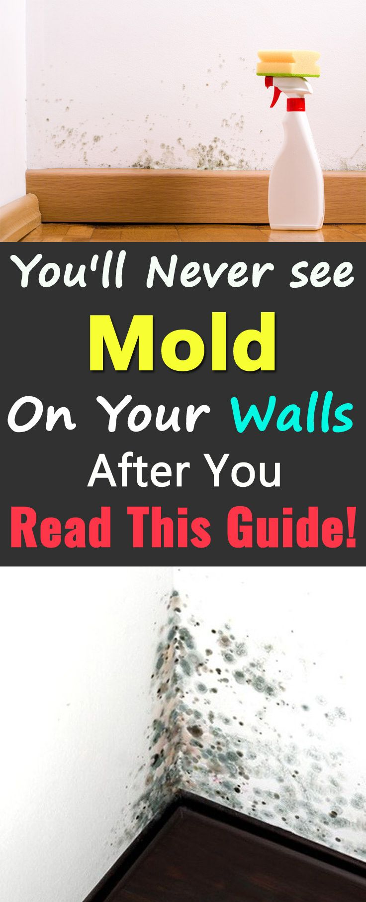 You 39 ll never see mold on your walls after you read this - Things you find on walls ...