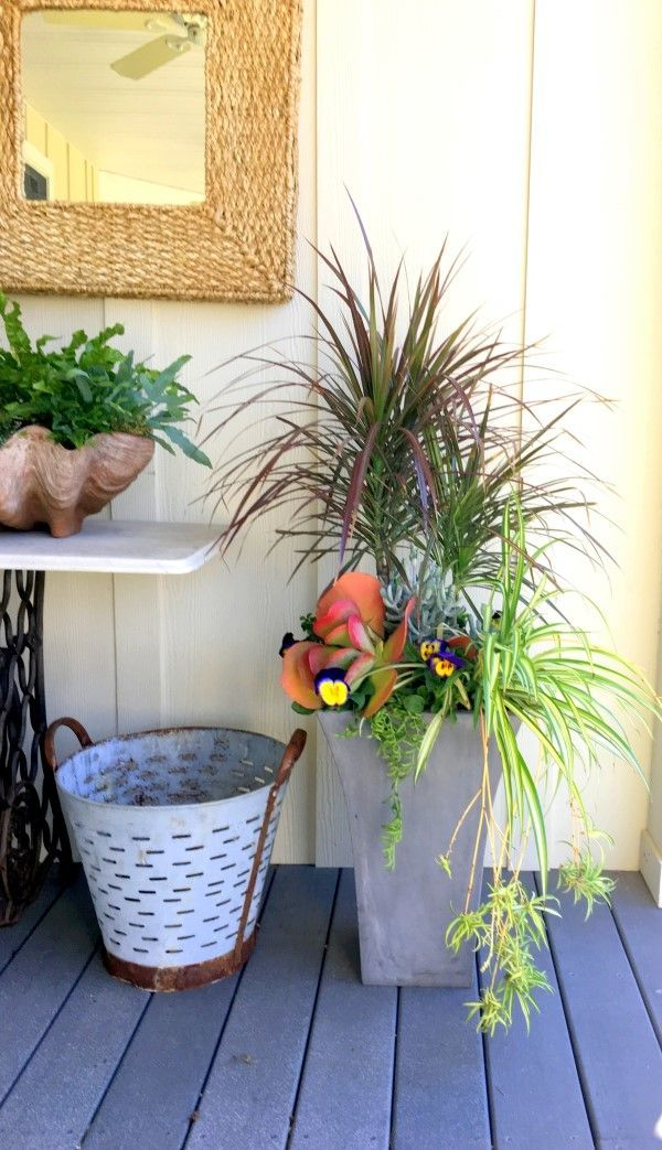 For medium light, this tall planter contains a mature dracaena, spider plant, and succulent plants that can handle medium light. For some additional color, pansies are added. When the pansies fizzle out, other flowering annuals will take their place.