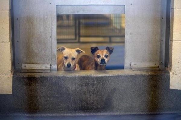 [VIDEO] USA: proposta legge per abolire le camere a gas nei canili e gattili | All-4Animals