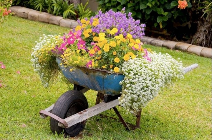 Mini garden on a wheelbarrow.